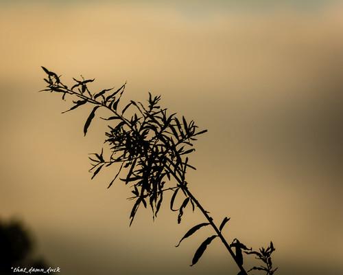 sunset sundown branch nikon