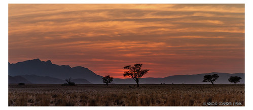 na africa namibia alba alberitreetrees albero clouds erba flickr geotagged grass montagne mountains namibiadiscovery2016 nuvole panorama red rosso sunrise tree