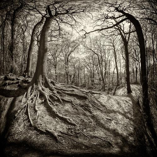 trees blackandwhite woods shadows zwartwit roots fisheye bos schaduwen wortels ockenburgh artlibres 5dmarkii