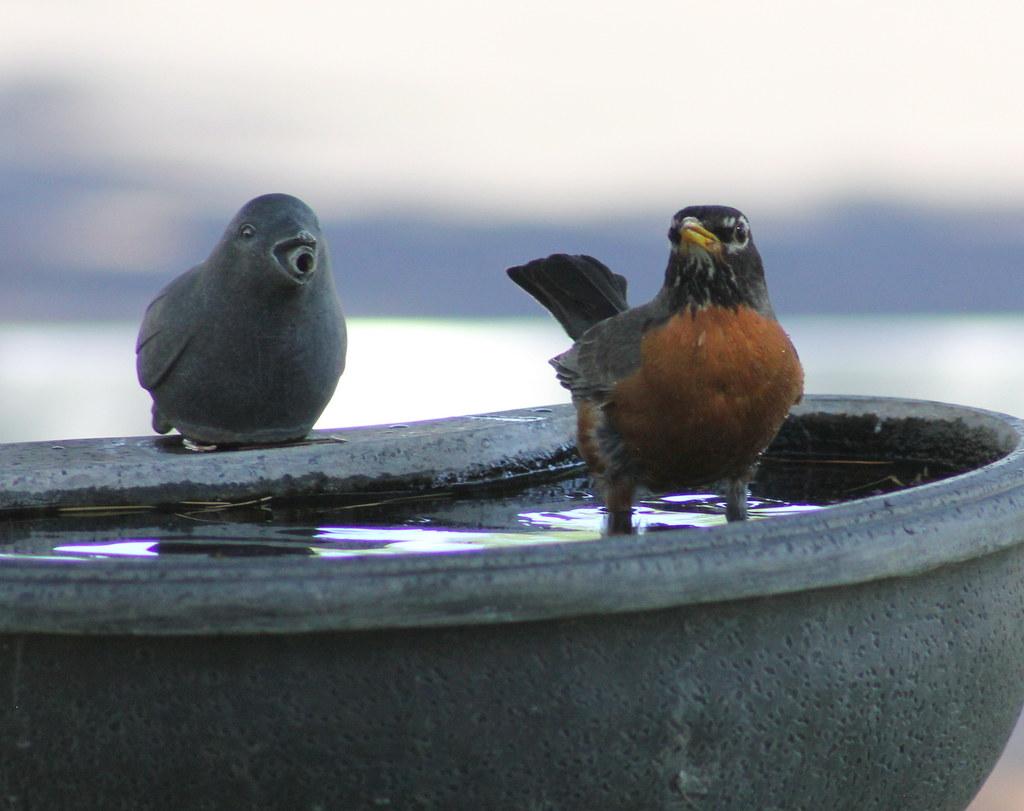 1-Cache...Hummer..Robin..Finch 5-23-13 048