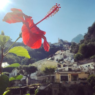 Hibiscus in Positano | by Halloj världen! /Inger