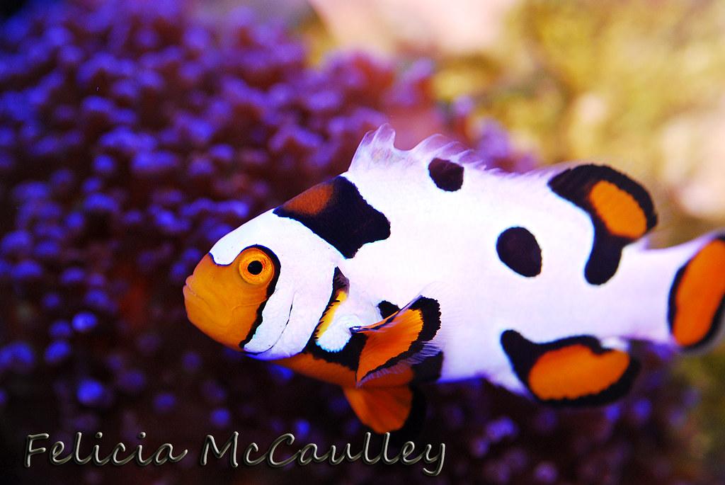 Marine Aquaria - cover