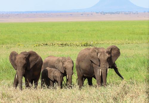 Tarangire NP Elephant family | by Chris Parker2012