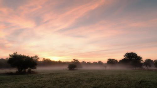 eadesmeadow worcestershirewildlifetrust meadow autumn morning dawn sunrise field outdoor landsscape sky trees grass mist wwt sony