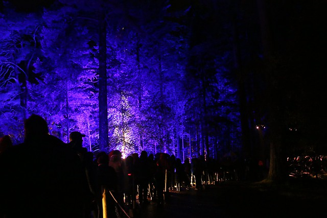 2016 - 14.10.16 Enchanted Forest - Pitlochry (231)