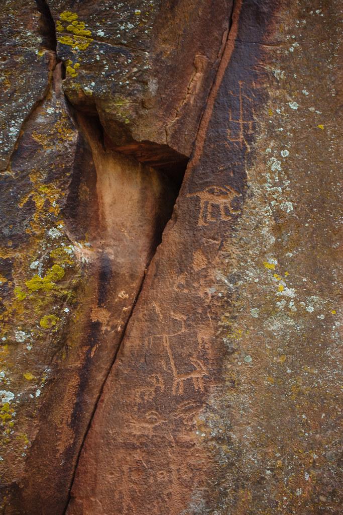 Light orange animal petroglyphs on a dark brown rock face with lichen