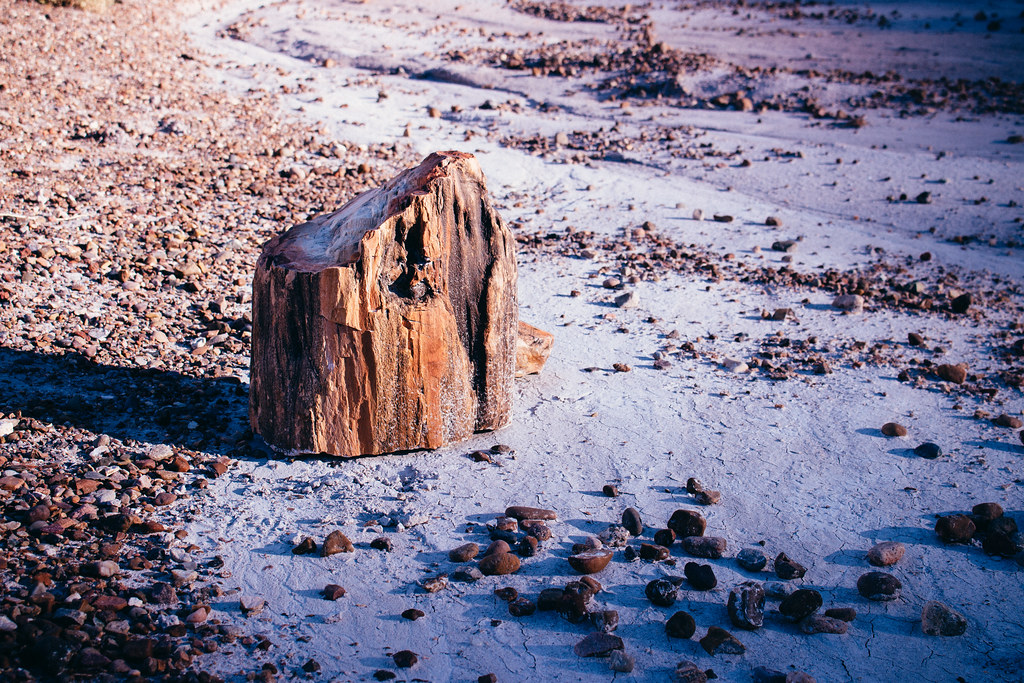 A cross-section of a petrified tree trunk stands among tiny pebbles in a dry lavender creek bed