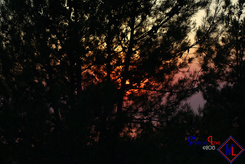 trees sunset tree landscape photography smoke lewis ml antoine marquis menifee marquislewis marquisantoinelewisphotography