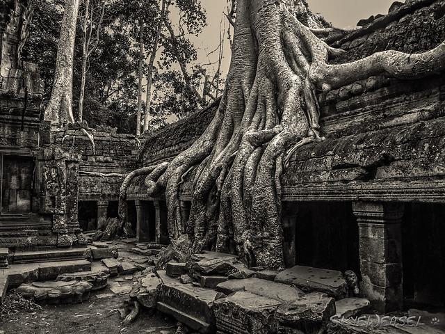 Roots at Ta Prohm temple, Cambodia