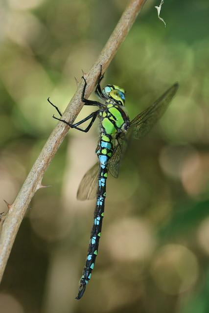 green 'n' blue