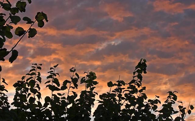 Las ramas más altas miran el fin del día