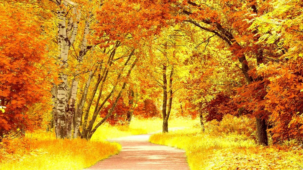 """Image result for hình ảnh mùa thu buồn"""""""