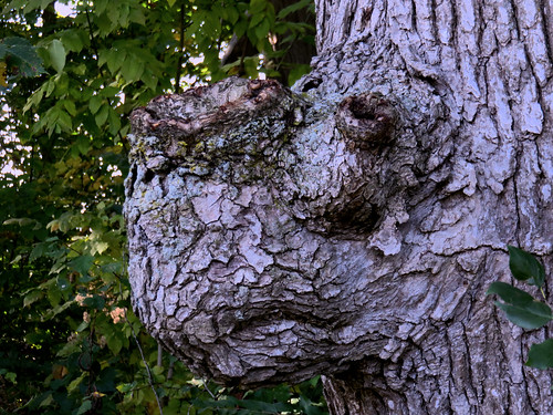 Really spooky tree Monster-Rhino HDR 20161010