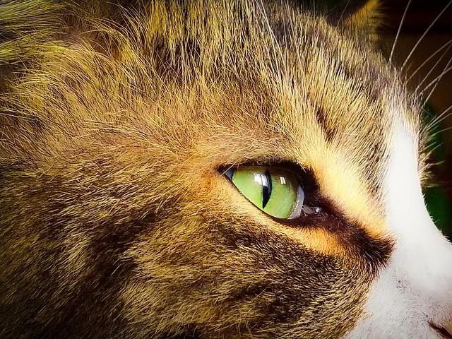 Occhi di 🐈