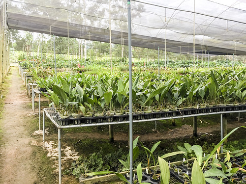 provinciademoronasantiago ecuador orchid tour andes mountains orchids plants plant flower