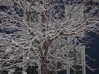 Blue House, White Tree