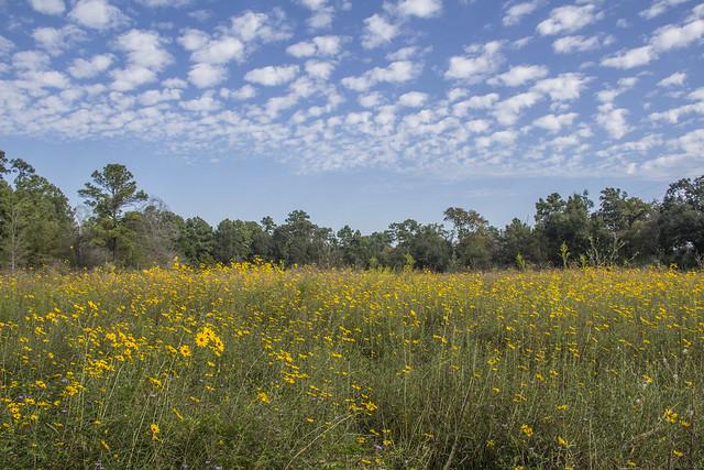 Houston Arboretum and Nature Center_43