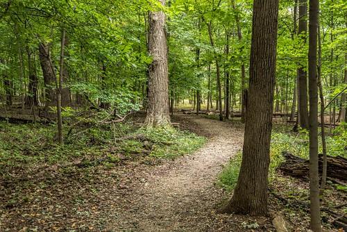 hss illinois nikkor24120mm northbrook rivertrailnaturecenter sliderssunday forests leaves paths trails trees woods