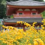 壺阪寺 やまぶき - IMG_1391