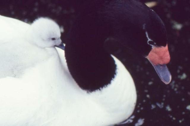 Riverbanks Zoo (1979)