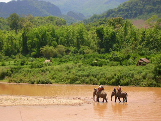 Elephant trekking, Laos | by Mandala Travel