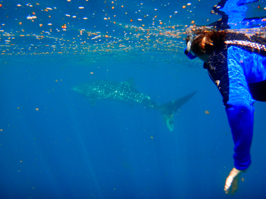 Snorkelling at Ningaloo Reef