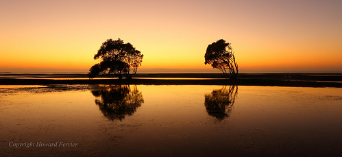 oceania sunrise plants dawn moretonbay orange seq beach beachmere tree inlet reflection sunshinecoast bay australia queensland flora vegetation time