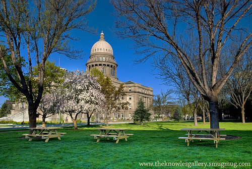 Picnic tables on the grass at the Capital | by The Knowles Gallery