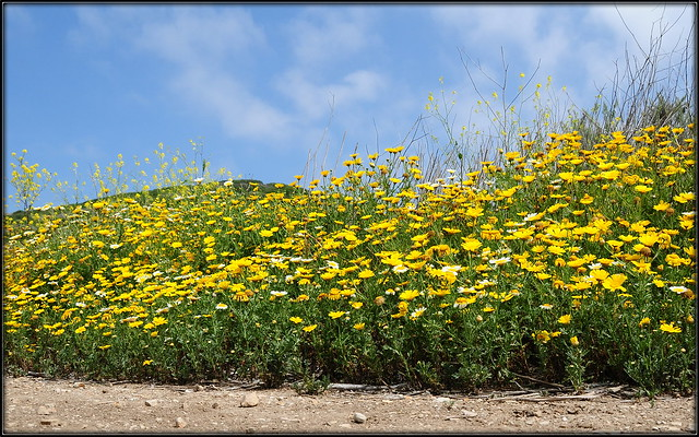 Yellow flowers...