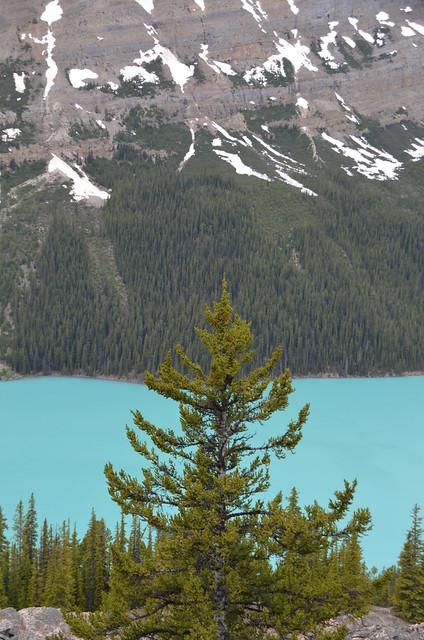 Peyto Lake (a0000695)