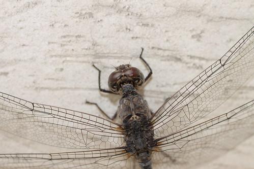 dragonfly jind nandgarh surenderdalal akshatdalal khetpathsala