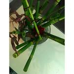 古巣でおけいこ。とくさ、ダリア、ローズなんとか(名前メモしそこねた) #ikebana