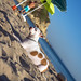 kiki_beach_umbrella_dmp