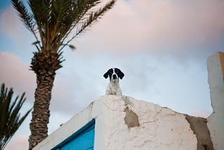 Sidi Ifni dog