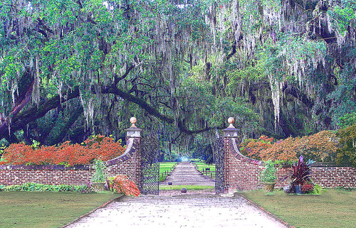 Boone Hall Plantation | by Rennett Stowe