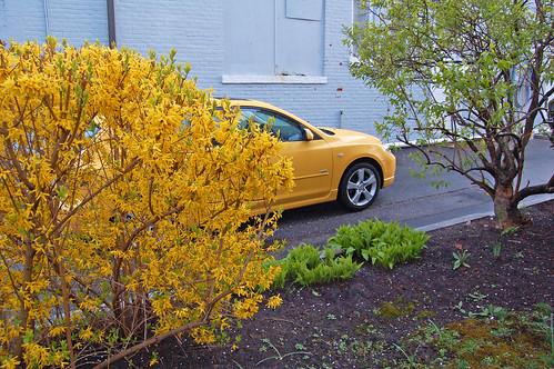 Floral Vehicle