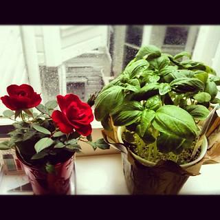 "My lil bebe windowsill ""garden"" | by aliaKJ"