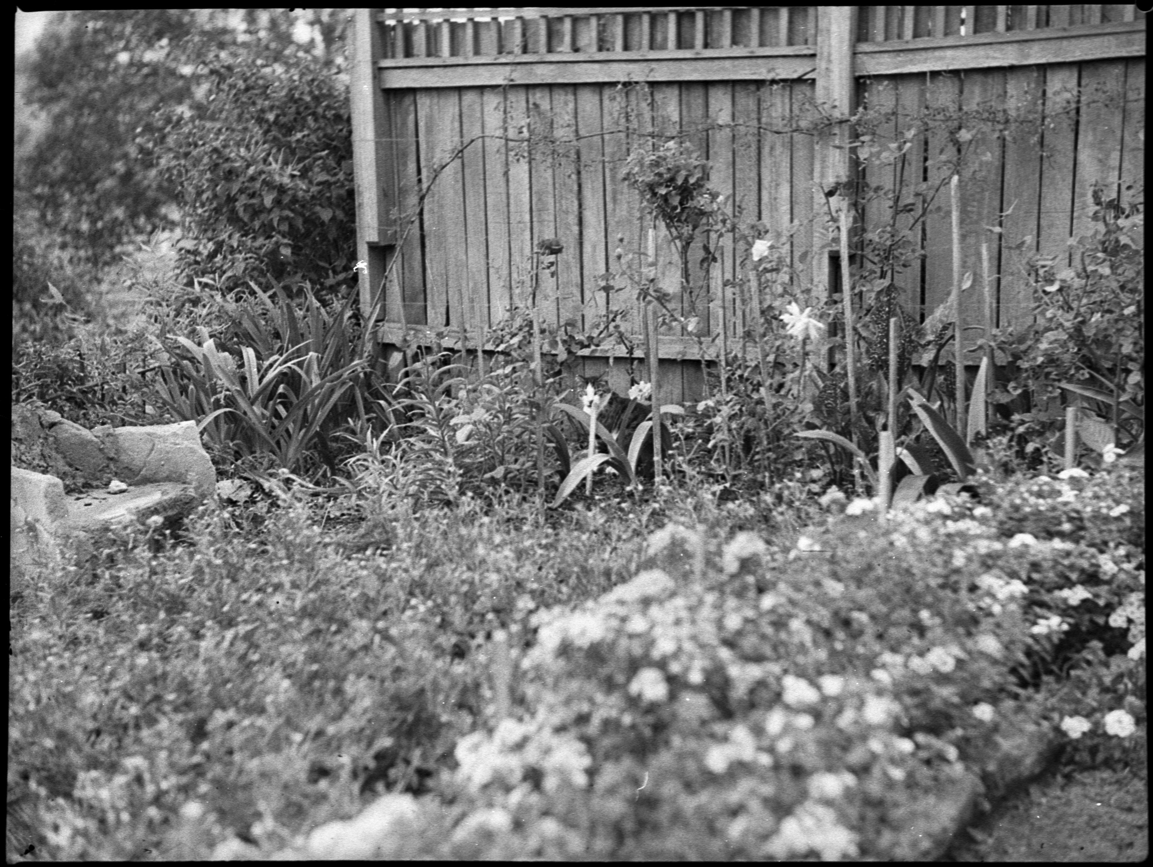 Mrs OE Friend's garden, January 1939, Sam Hood