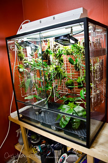 Intermediate vivarium | by orchidkarma