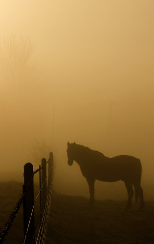horse mist silhouette fence highqualityanimals