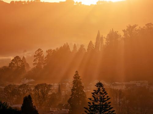 morning winter mist home gardens botanical smog bravo north dunedin fires warming