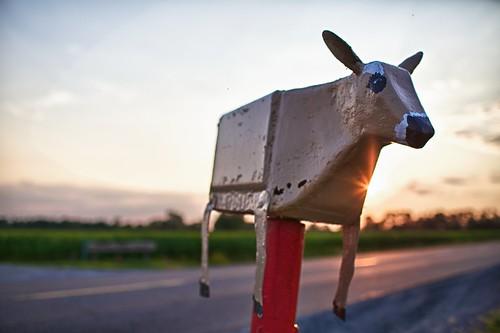sunset mailbox rural cow farm ottawa week28 flyingcow 2012 522012 52weeksthe2012edition weekofjuly8