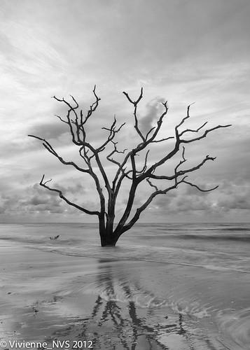 beach seashells sunrise southcarolina plantation botanybay edistoisland deadtrees botanybayplantation
