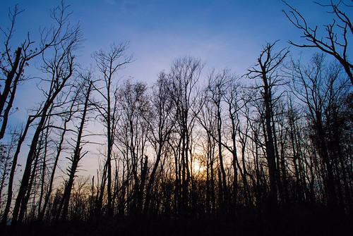 trees sunset tennessee eerie spooky trail appalachian