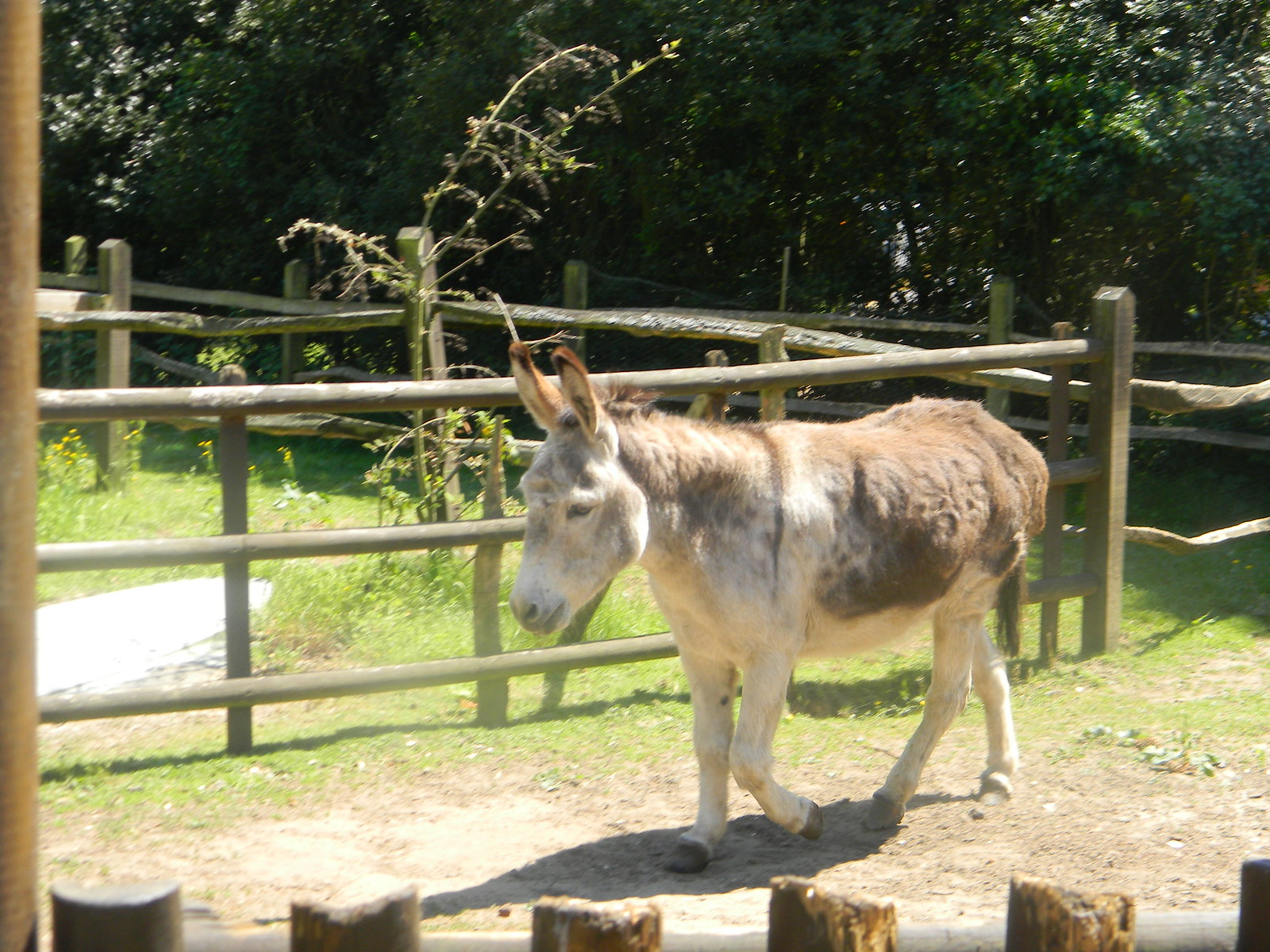 Donkey's donkey Farnham Circular The pub, The Donkey, has a couple of donkeys.