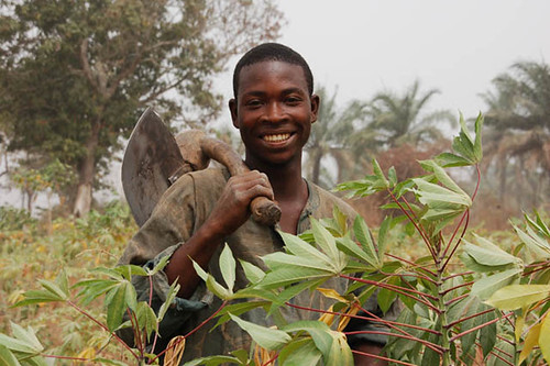 Farmer in his cassava farm | by IITA Image Library