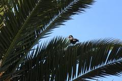 bird on a palm