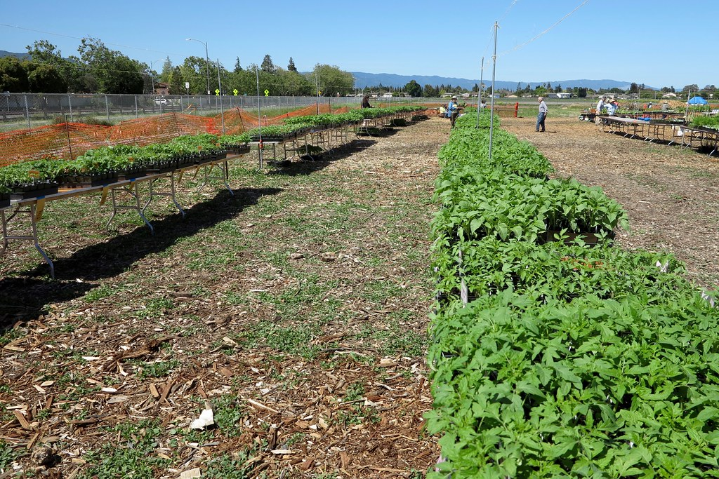 Day before sgm 2018 master gardeners of santa clara - Master gardeners santa clara county ...