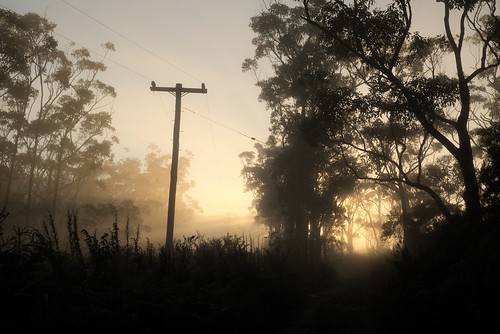 fog foggy light morning nature pole power shine sunrise trees vegetation