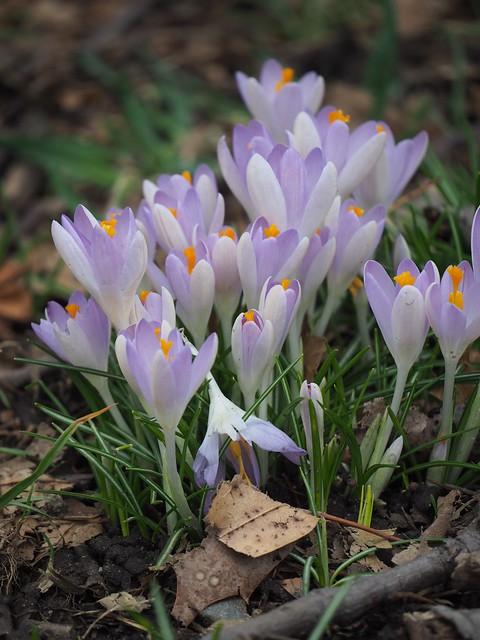 Sat, 2018-02-24 12:52 - Brooklyn Botanic Garden